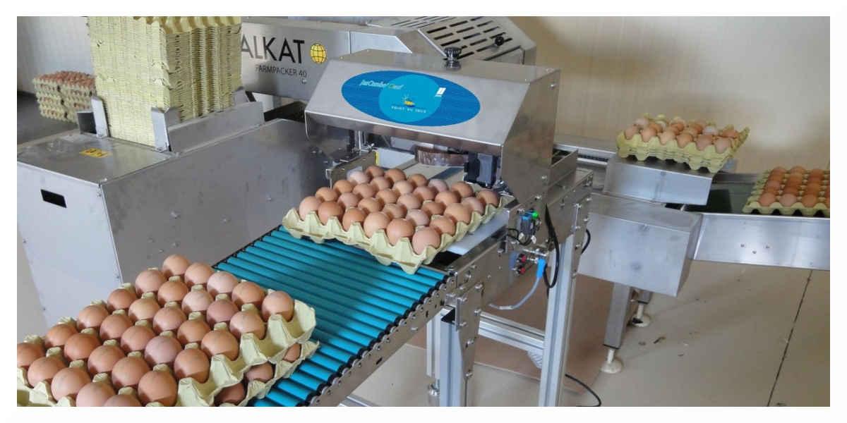 Contamination : la crise des œufs contaminés arrive en France
