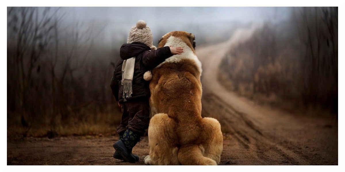 Les traitements anti-puces des animaux de compagnie sont dangereux