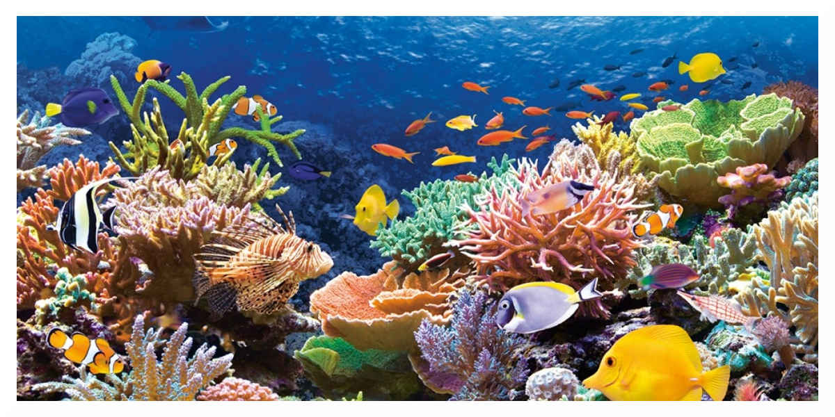 La Grande Barrière de corail Australienne : une «hécatombe catastrophique»