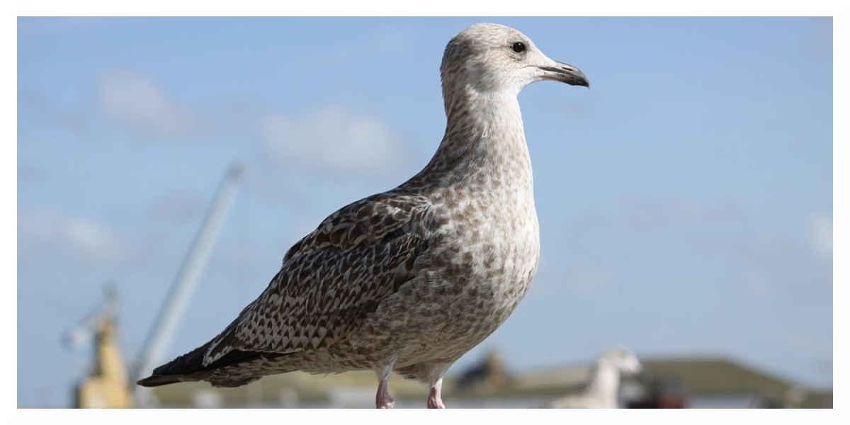 La Chine a détecté un premier cas humain de grippe aviaire H10N3