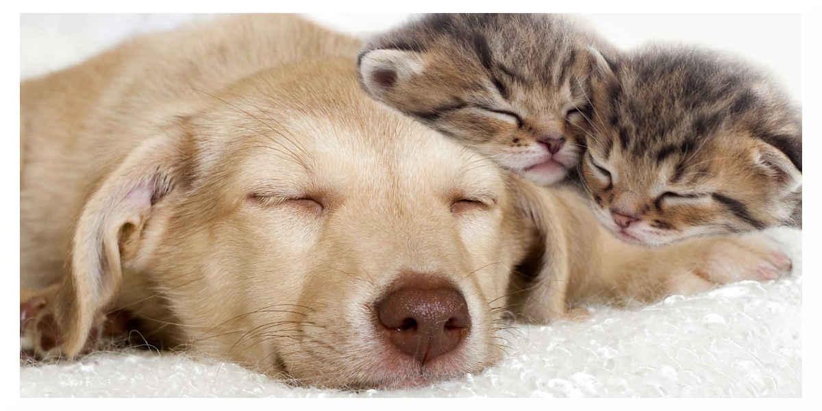 Maltraitance animale : les députés se sont mis d'accord