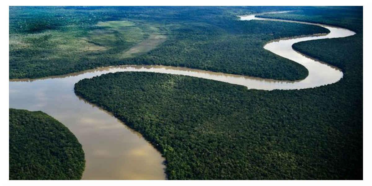 La forêt de l'Amazonie a perdu son rôle protecteur de réservoir de carbone