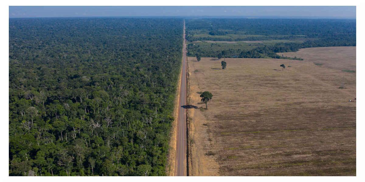 La forêt amazonienne émet désormais plus de carbone qu'elle n'en absorbe