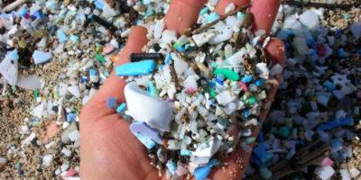 Pollution plastique : Des pénis de plus en plus petits