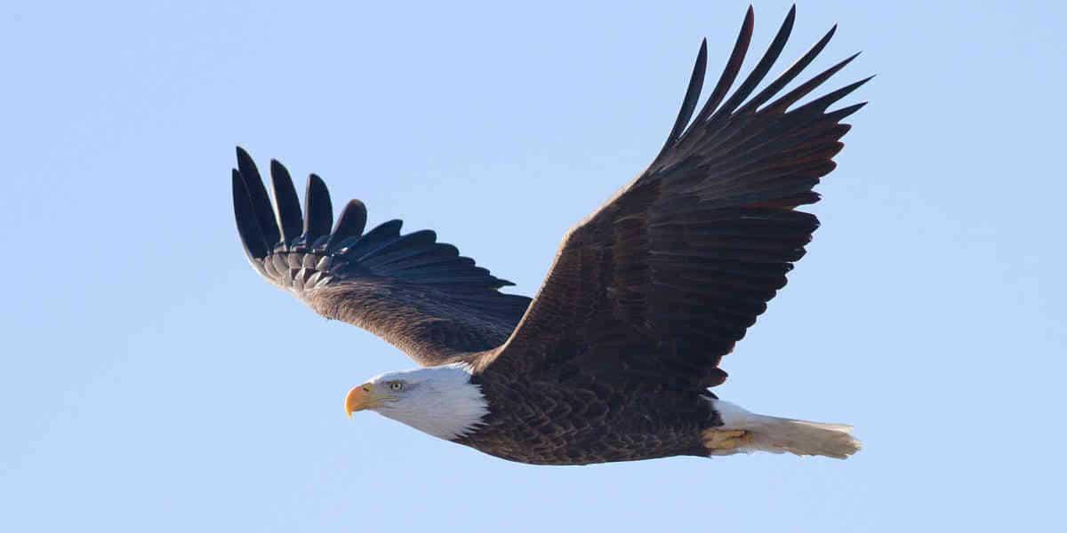 Le gouvernement Biden va rétablir des protections d'espèces menacées