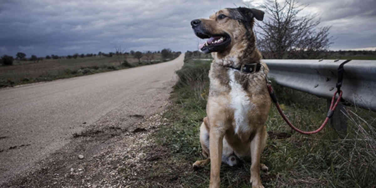 L'association de protection animale PETA appelle les familles à faire stériliser leur chien ou chat